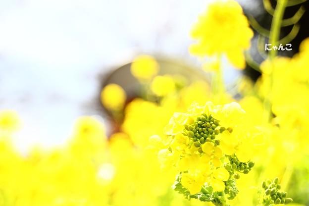 ~春、一番~