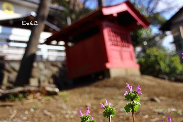 Photos: ~小さい春、見つけた♪~
