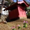 写真: ~小さい春、見つけた♪~
