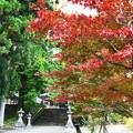 写真: 長滝白山神社の紅葉