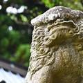 村山浅間神社の狛犬さん