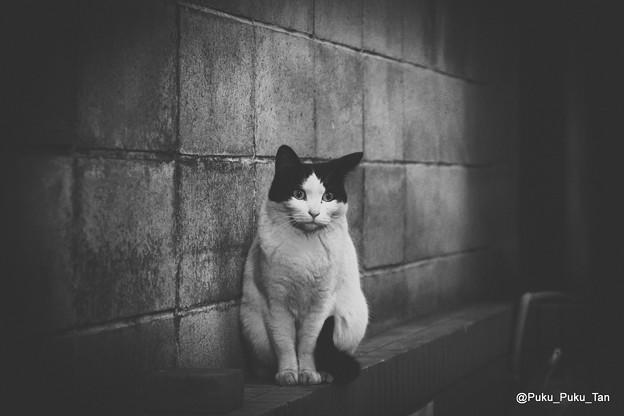 路地裏の住人。