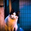 写真: 祝!猫の日(ΦωΦ)