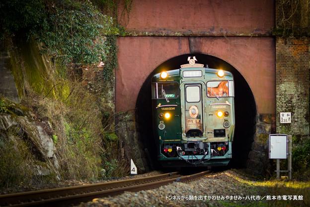 トンネルから顔を出すかわせみやませみ。