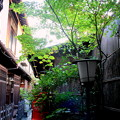 Photos: 路地裏モミジ