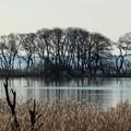 写真: 冬の琵琶湖