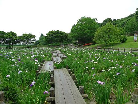 雨の宮地嶽神社(11)