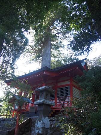 yamurasugi10