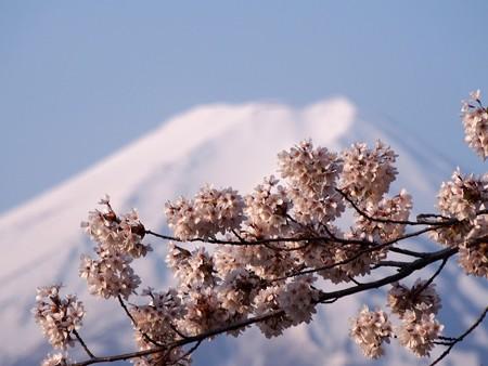 arakurayamasengenkouen36
