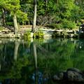 深緑の水面