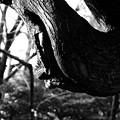 Photos: 木から覗く顔