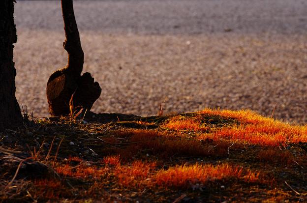 Photos: 地面が燃える