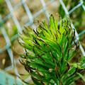 緑の生き物