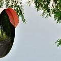 写真: メタセコイア並木 2