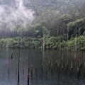 Photos: 雨の自然湖
