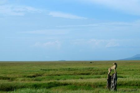 草原の狩人