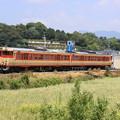 Photos: 国鉄急行色列車