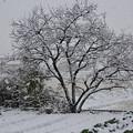 Photos: 雪02