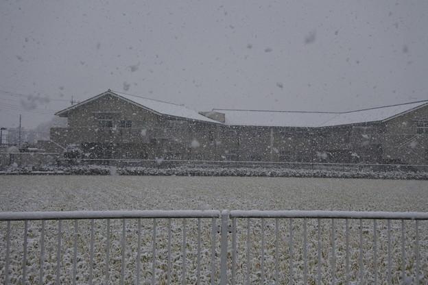 Photos: 雪04