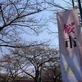写真: 桜市01