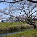 写真: 桜市03