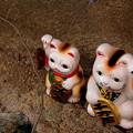 ~広島には「野良招き猫」がいる・・・( ̄▽ ̄;)