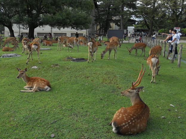 29 奈良公園