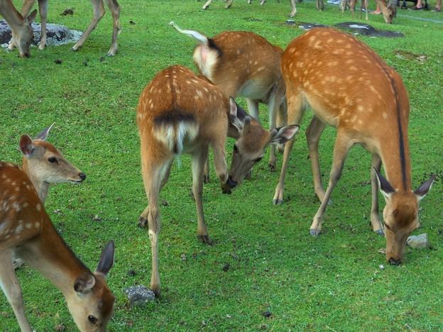 30 奈良公園