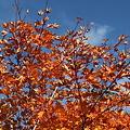 Photos: IMG_8929那須 茶臼岳 姥ヶ平の紅葉