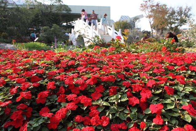 写真: IMG_96142010台北花博_FLORA_EXPO