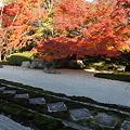 写真: IMG_9911京都紅葉2