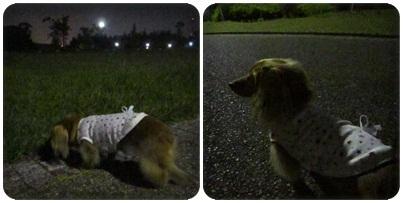 20111013 お散歩