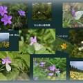 白山高山植物園(1)