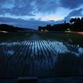 Photos: 夜の田んぼ