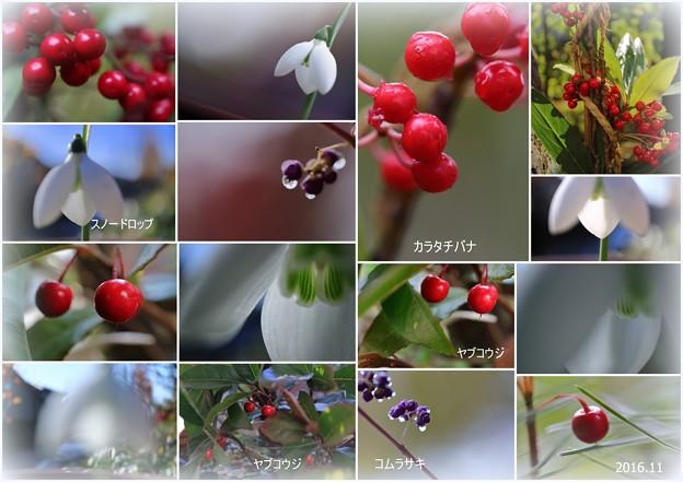 秋の実など