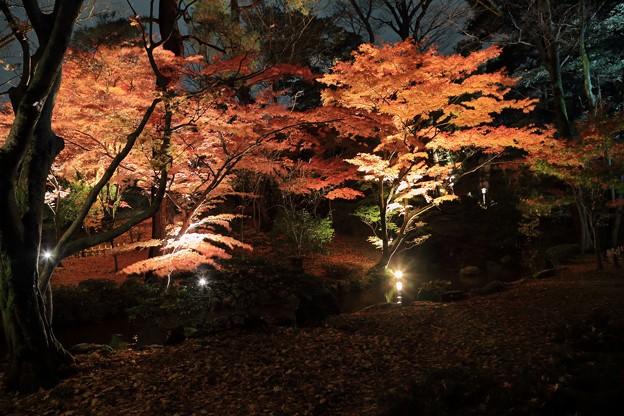 兼六園 秋のライトアップ (3)