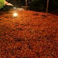 山崎山 モミジの絨毯