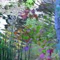 Photos: 円覚寺 アートのように(1)