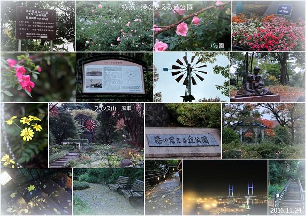 Photos: 夕暮れの横浜 港の見える丘公園