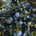 写真: クリスマスツリー 金沢駅(1)