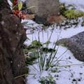 Photos: 庭の雪