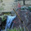 玉泉院丸庭園 マユミの実