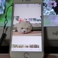 写真: iPhone 7Plus(1)