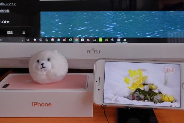 写真: iPhone 7 Plus(2)