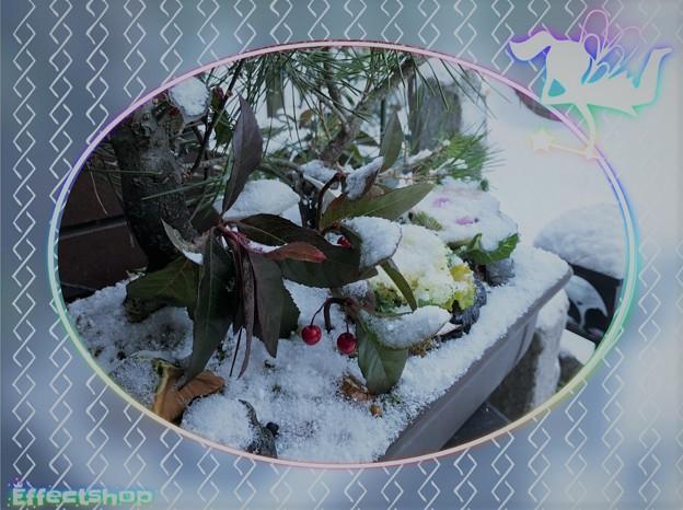 松竹梅の寄せ植えとミニ葉牡丹 十両(ヤブコウジ)