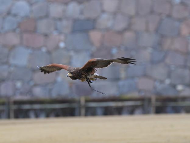 写真: 鷹