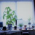 写真: 今朝の窓辺