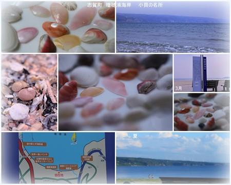 羽咋・志賀町 増穂浦海岸 さくら貝