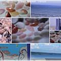 写真: 羽咋・志賀町 増穂浦海岸 さくら貝