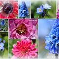 写真: 庭の3月の花(1) blue&red
